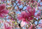 Vitality walk: lente-editie op dinsdag 19 maart