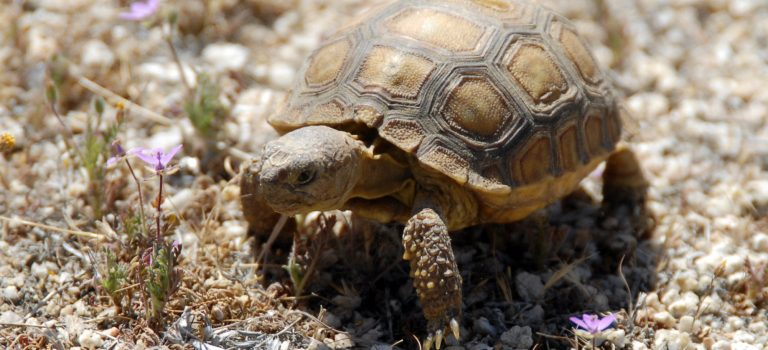 Nieuw boek: Het geheim van de schildpad