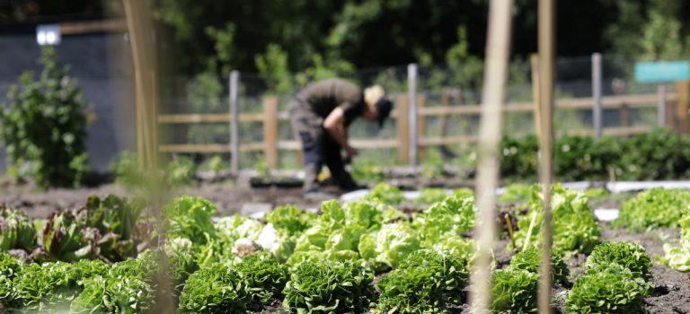 Werken aan een gezonde leefstijl bij de Kwekerij